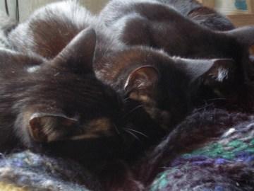 three cats sleeping on shawl