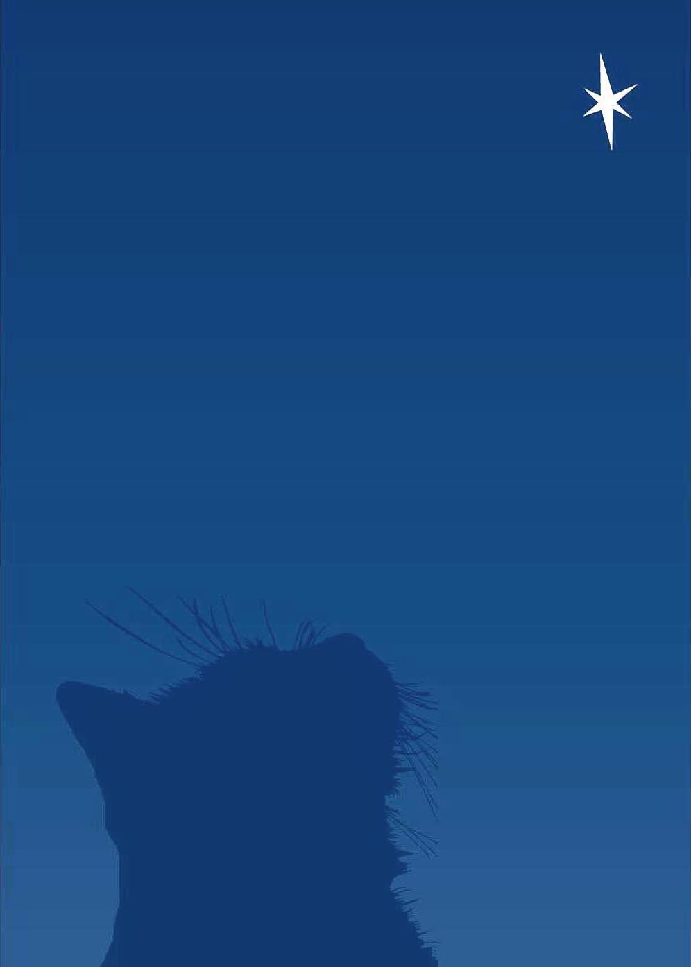 holiday card cat looking at star