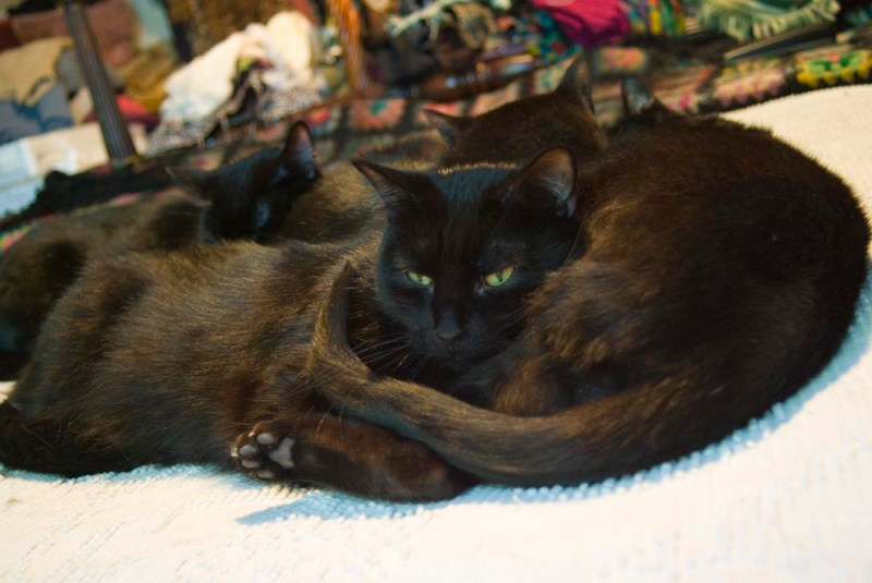 four black cats cuddling with colorful clothing