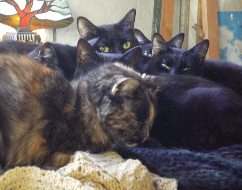 one tortoiseshell and five black cats