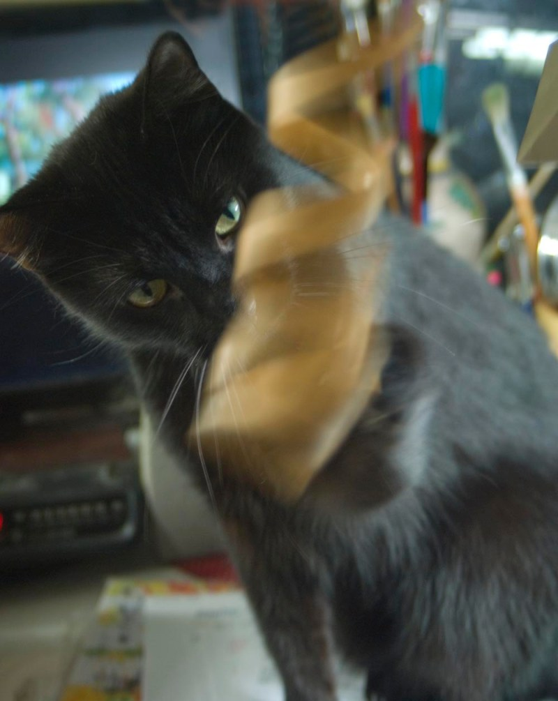 black cat looking at paper curl