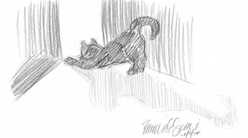 pencil sketch of cat stretching
