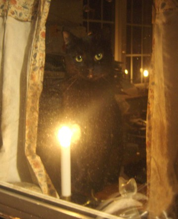 cat in window with candle