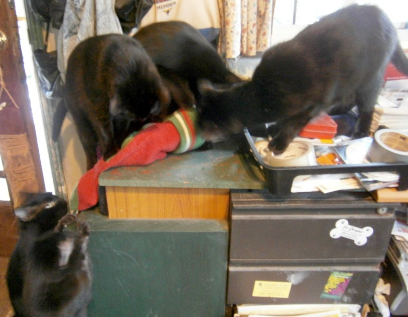 five black cats with toys