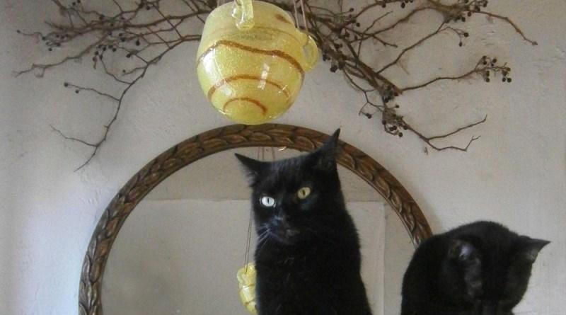 two black cats interior