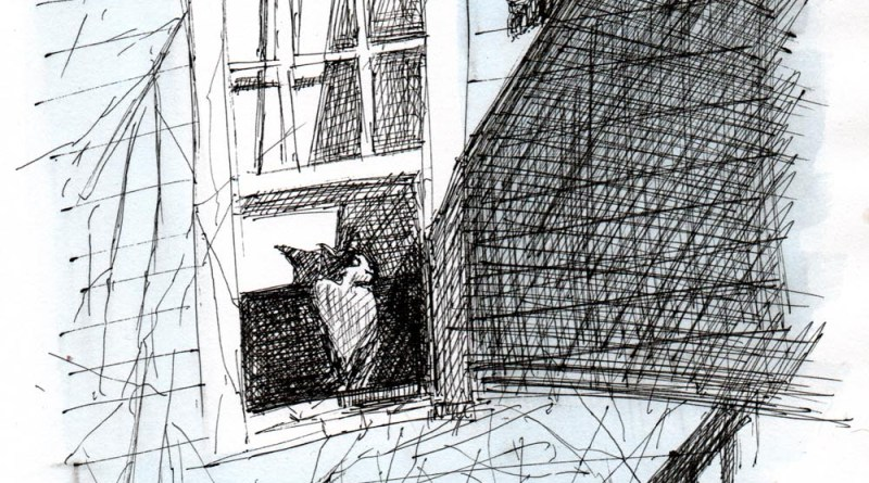 ink sketch of cat looking out window at squirrel