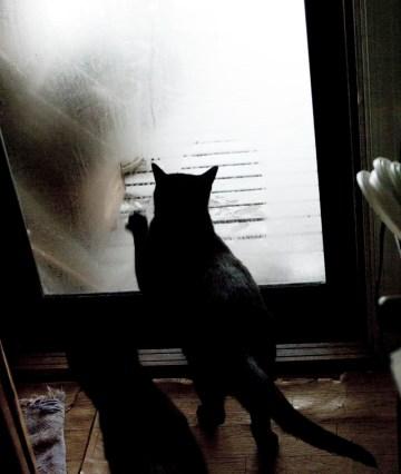 black cat wiping window
