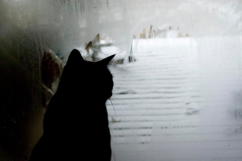 black cat looking out door
