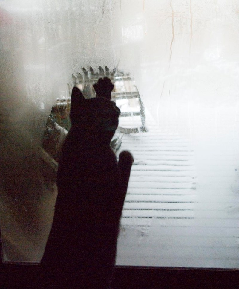black cat wiping window