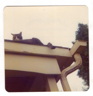 cat on edge of roof