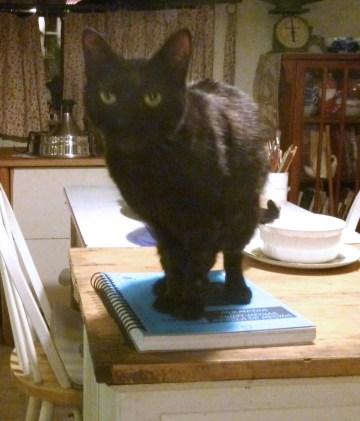 black cat on sketchbook