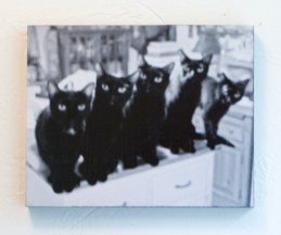photo of five black cats
