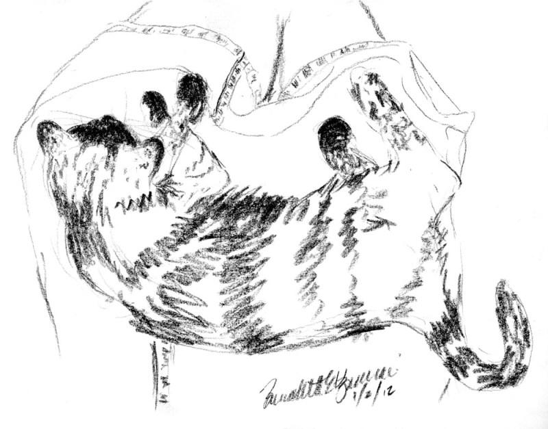 """Kelly Sleeping On My Lap"", charcoal pencil, 9"" x 7"" © Bernadette E. Kazmarski"