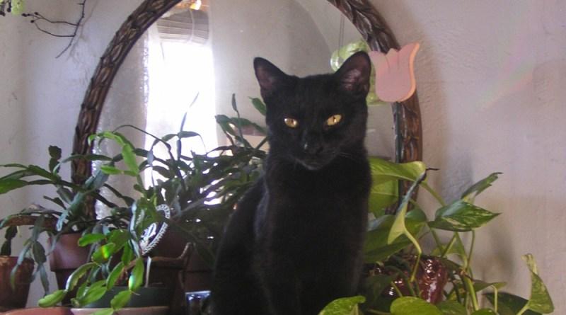 black cat among plants