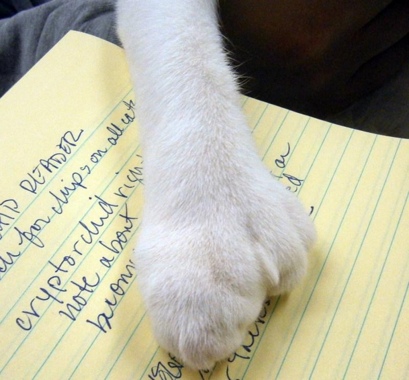 polydactyl cat paw