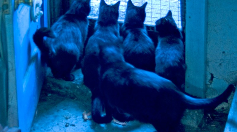 five cats at door