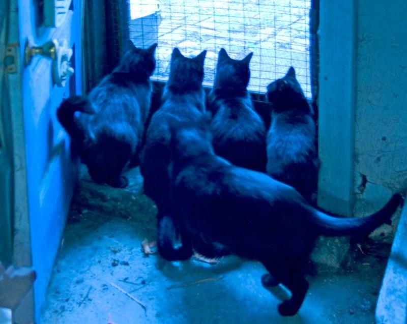 five cats at door