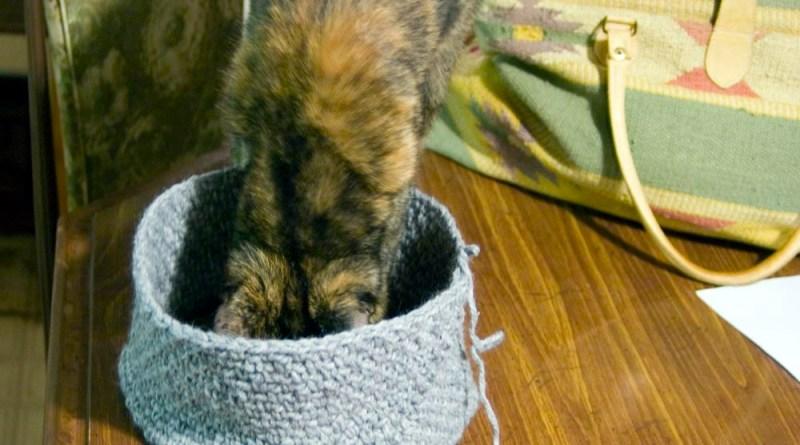 tortoiseshell cat stepping into crocheted hat