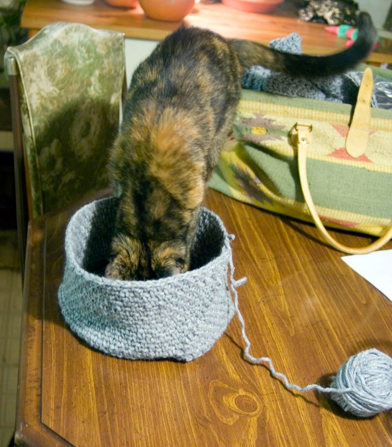 tortoiseshell cat stepping into crocheted hat