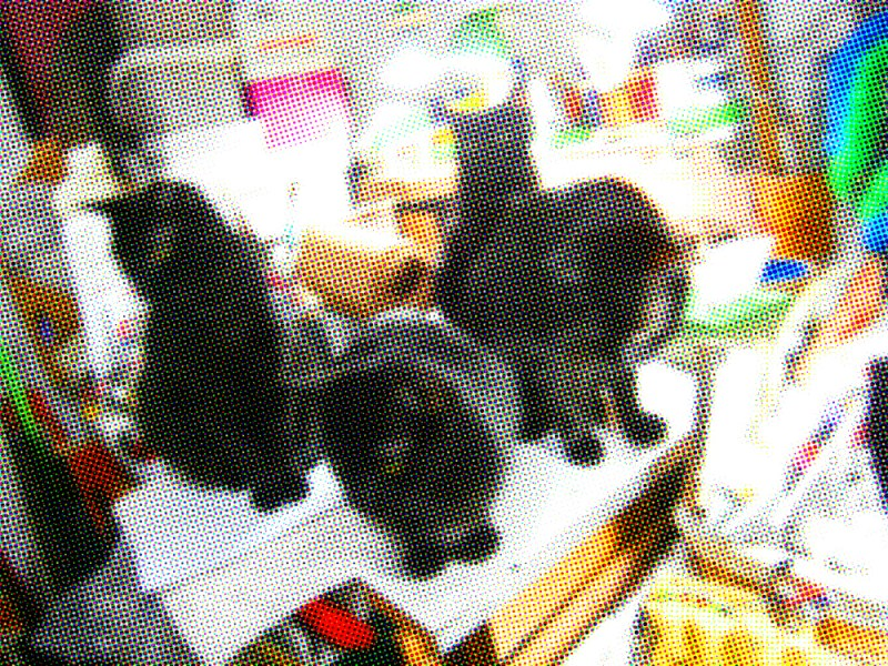 color halftone of four black cats