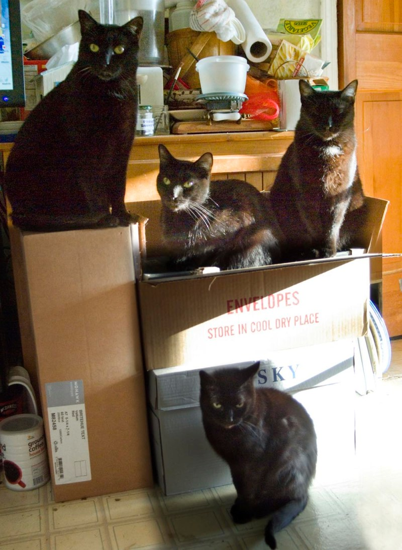 four cats and cardboard boxes