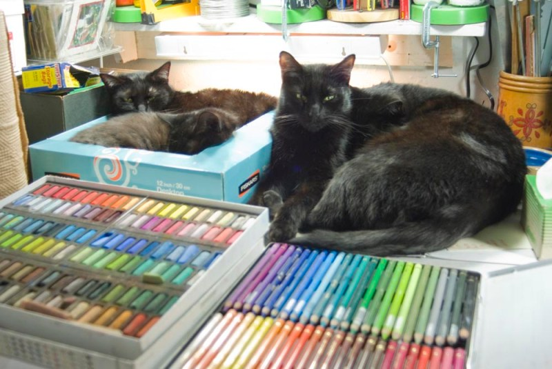 four black cats and pastels and pastel pencils