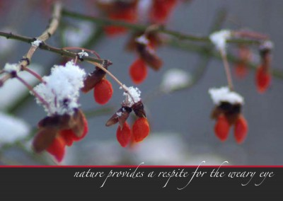 """""""Unexpected Berries"""" set of 4 holiday cards."""
