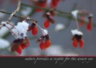 """Unexpected Berries"" set of 4 holiday cards."