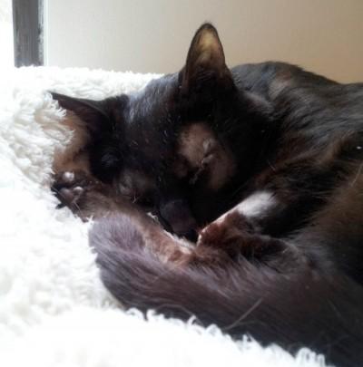 black cat sleeping