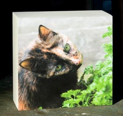 print of tortoiseshell cat with parsley