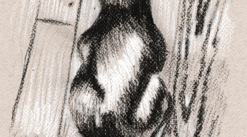 sketch of black cat on floor