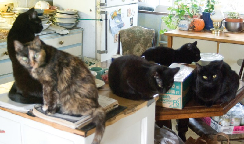 four black cats and tortoiseshell cat in kitchen