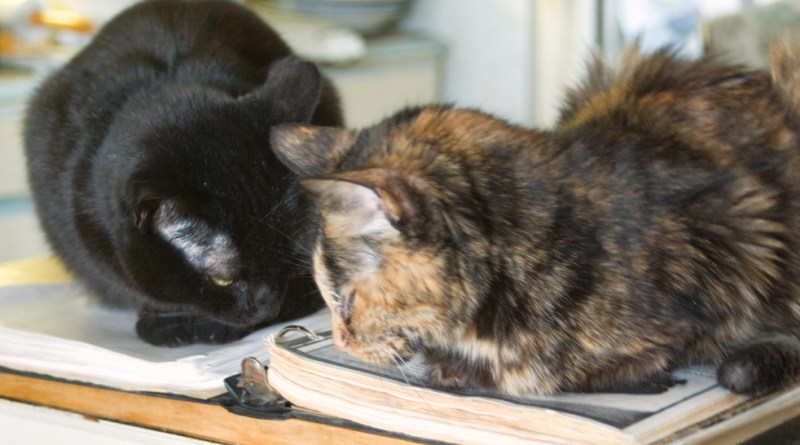 black cat and tortoiseshell cat