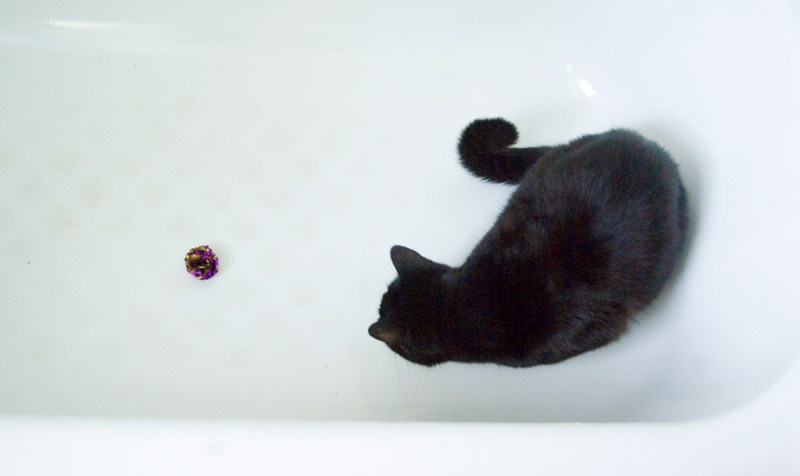 black cat in tub with toy