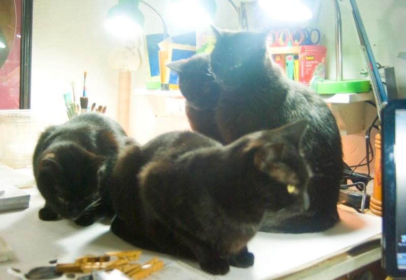 four black cats in studio