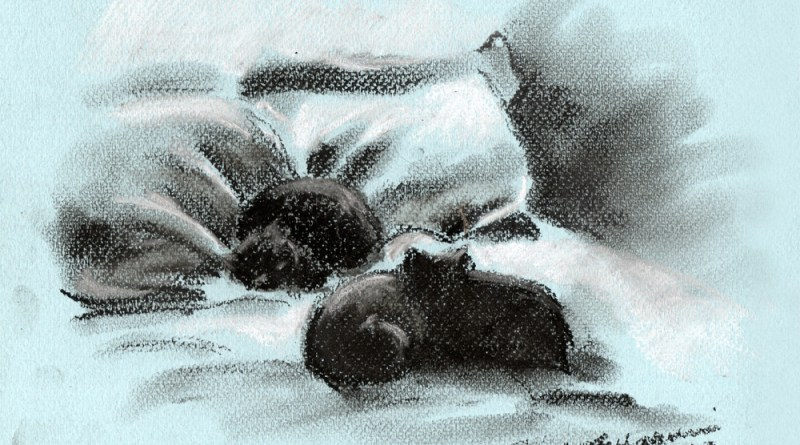pastel sketch of black cats on bed