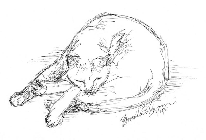 ink sketch of sleeping cat