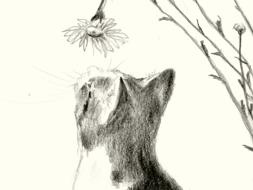 Detail of Conversation With a Daisy, cat with daisy.