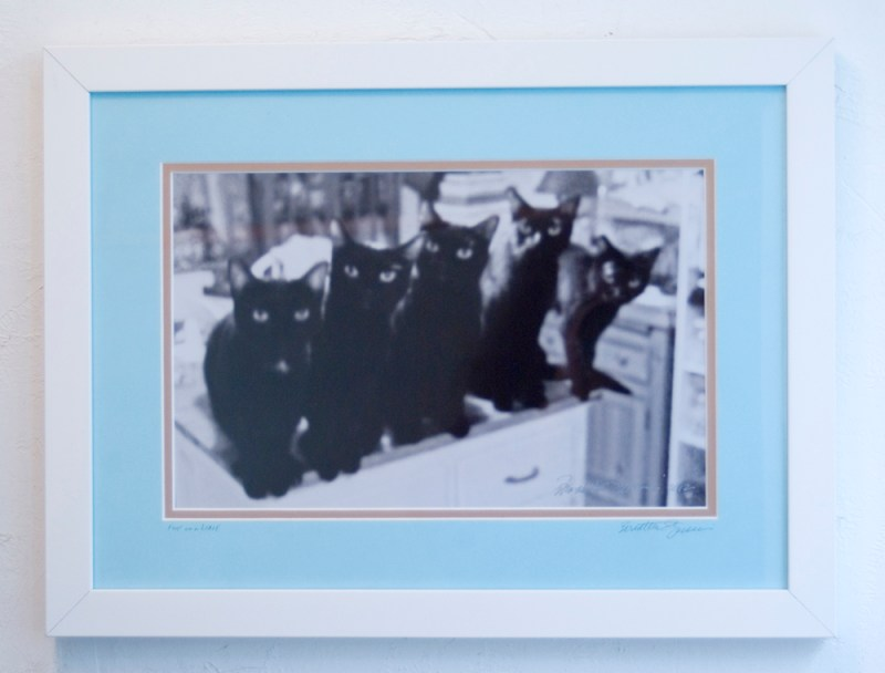 framed photo of five black cats.
