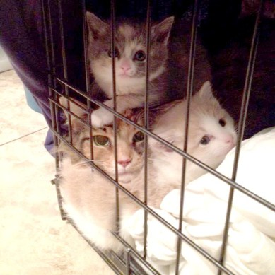 mother cat and kittens in a cage