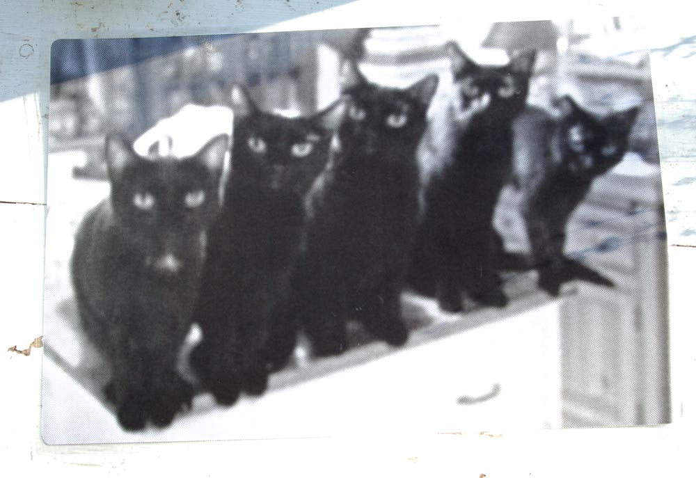 """Five Black Cats in a Line"" black and white side of laminated placemat."