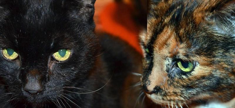 Black and tortoiseshell cats
