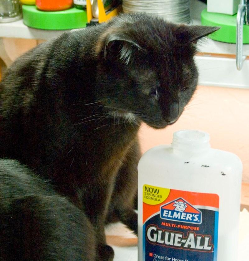 black cat sniffing glue bottle
