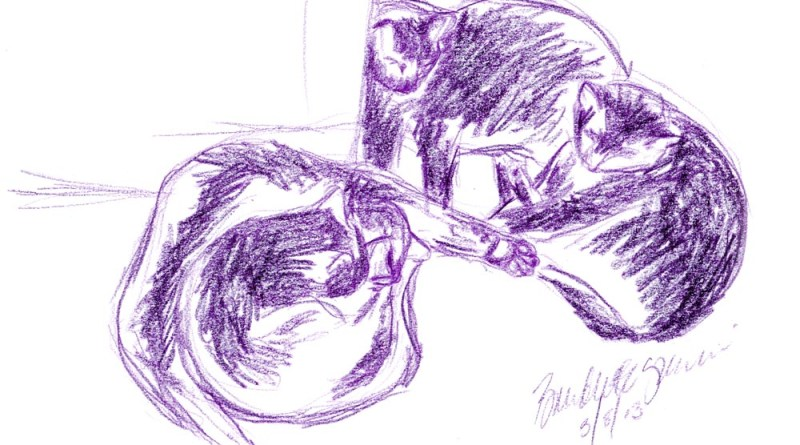 colored pencil sketch of four cats