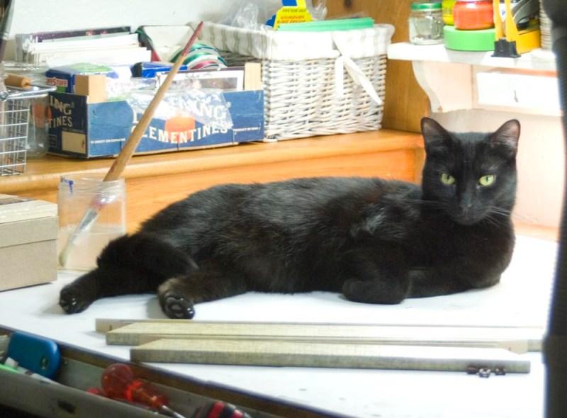 black cat on work table