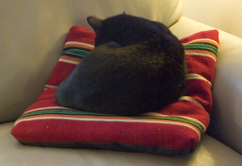 black cat on navajo pillow