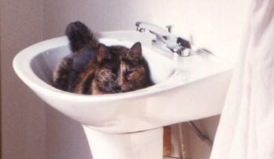 tortoiseshell cat in sink