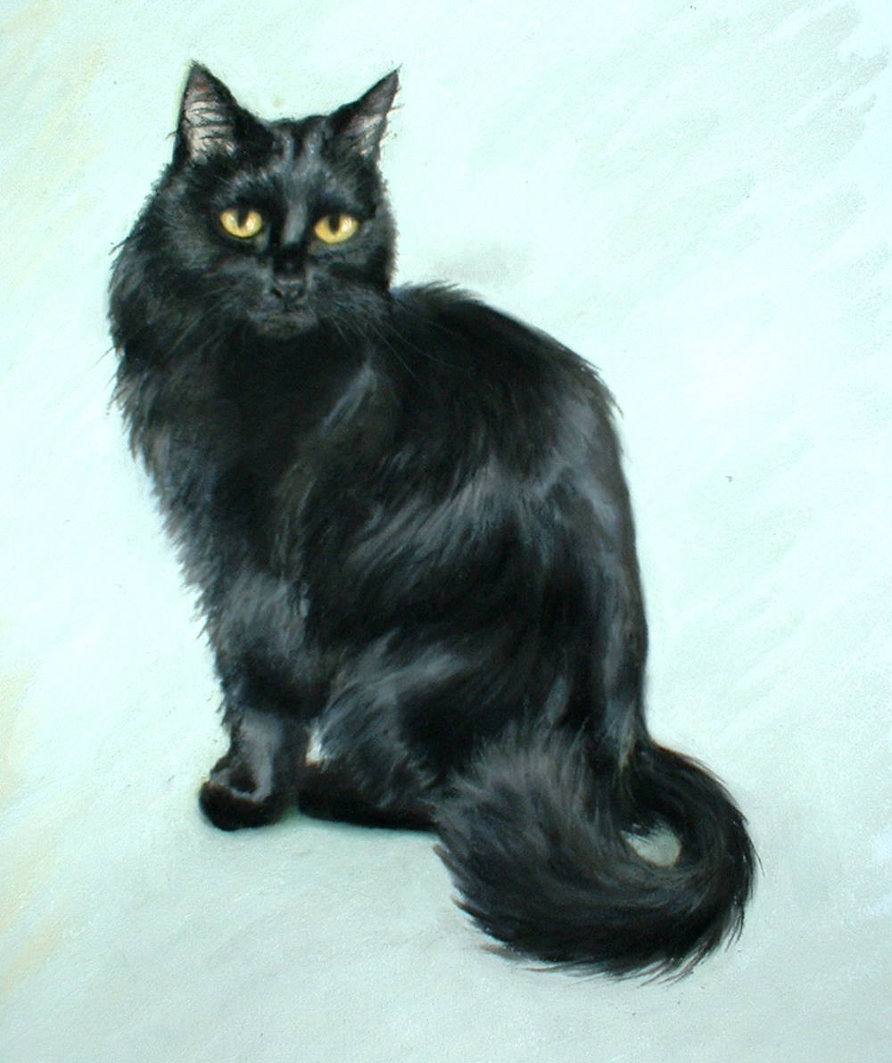 pastel portait of long-haired black cat
