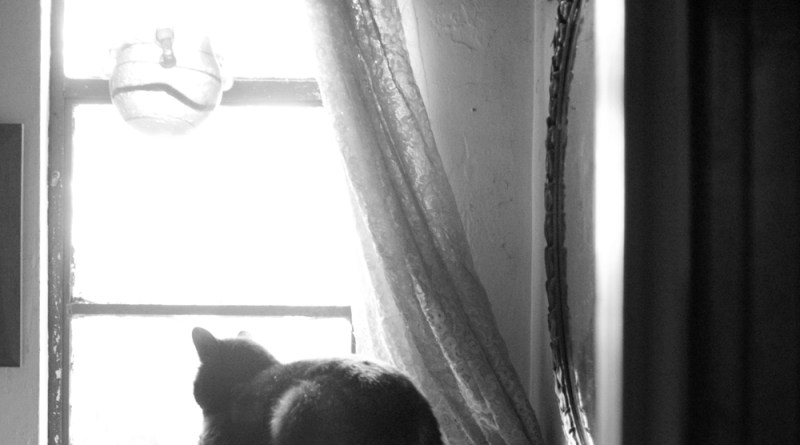 black and white photo of cat looking out window