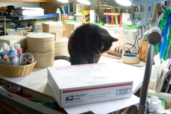 black cat having bath
